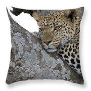 Waiting For Nightfall Throw Pillow