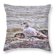 Waiting Gull Throw Pillow