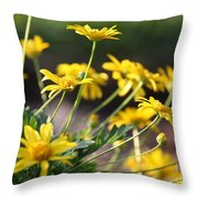 Waking Up To Sunshine Throw Pillow