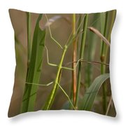 Walking Stick Insect Throw Pillow by Ted Kinsman