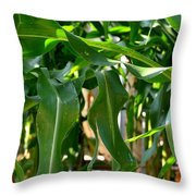 Walking Through The Cornfields Throw Pillow