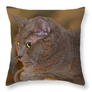 Warm Kitty  Throw Pillow