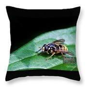Wasp Break Throw Pillow