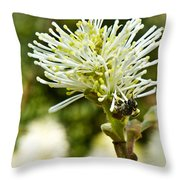 Wasp On Fothergilla 1 Throw Pillow