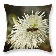 Wasp On Fothergilla 5 Throw Pillow