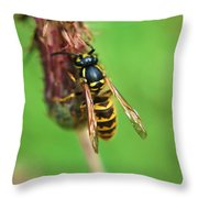 Wasp On Plant Throw Pillow