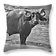 Water Buffalo In Black And White Throw Pillow
