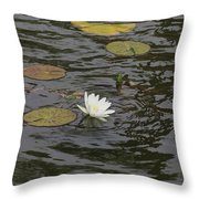 Water Circles On The Lily Pond Throw Pillow