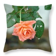 Water Dripping From A Peach Rose After Rain Throw Pillow