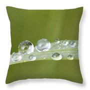 Water Drop On Blade Grass Throw Pillow