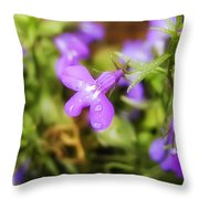 Water Drops On A Purple Flower Throw Pillow