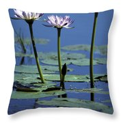 Water Lily Flowers Bloom From A Wetland Throw Pillow