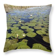 Water Lily Nymphaea Sp Flowering Throw Pillow