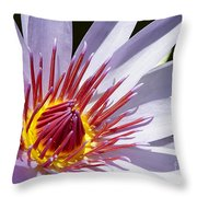 Water Lily Soaking Up The Sun Light Throw Pillow