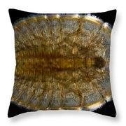 Water Penny Beetle Larva Throw Pillow