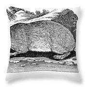 Water Rat Throw Pillow