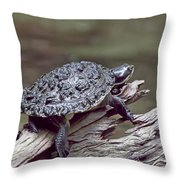Water Turtle Throw Pillow