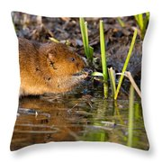 Water Vole At Dusk Throw Pillow