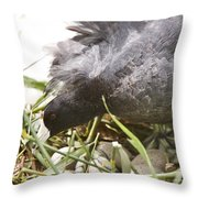 Waterhen Coot On Nest With Eggs Throw Pillow