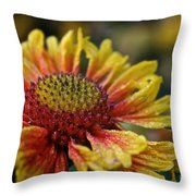 Waterlogged Arizona Apricot Throw Pillow