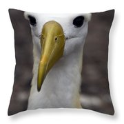 Waved Albatross Portrait Throw Pillow