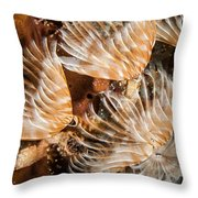 Waving In The Current Throw Pillow