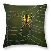 Weave Master Throw Pillow