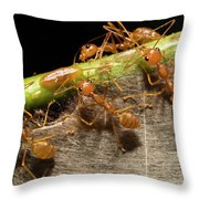 Weaver Ant Oecophylla Longinoda Group Throw Pillow
