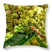 Webworm Moth Throw Pillow