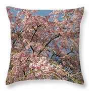 Weeping Cherry Tree In Bloom Throw Pillow