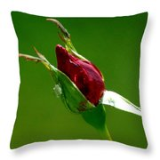 Weeping Rose Bud Throw Pillow