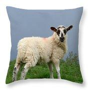 Wensleydale Lamb Throw Pillow