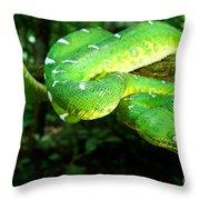 West Amazonian Emerald Tree Boa Throw Pillow