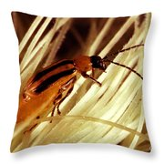 Western Corn Rootworm Beetle Throw Pillow