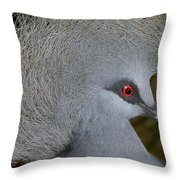 Western Crowned-pigeon Goura Cristata Throw Pillow