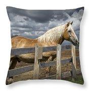 Western Palomino Horse In Alberta Canada No.1335 Throw Pillow