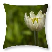 Western Pasqueflower Throw Pillow