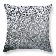 Western Sandpipers During Spring Throw Pillow