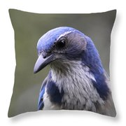 Western Scrub Jay Portrait Throw Pillow