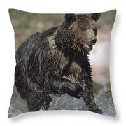 Wet Grizzly Bear Running In Stream Throw Pillow