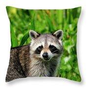 Wetlands Racoon Bandit Throw Pillow