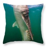 Whale Shark, La Paz, Mexico Throw Pillow