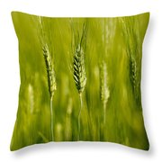 Wheat On The Field Throw Pillow