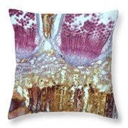 Wheat Rust Puccinia Graminis Throw Pillow