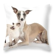 Whippet And Siamese Kitten Throw Pillow
