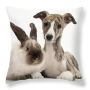 Whippet Pup With Colorpoint Rabbit Throw Pillow