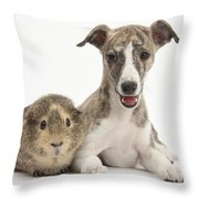 Whippet Pup With Guinea Pig Throw Pillow