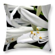 White Agapantha Throw Pillow