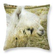 White Alpaca Photograph Throw Pillow