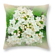 White And Cream Hydrangea Blossoms Throw Pillow